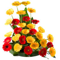 Classic Arrangement of Majestic 30 Mixed Colorful Gerbera with Lots of Love