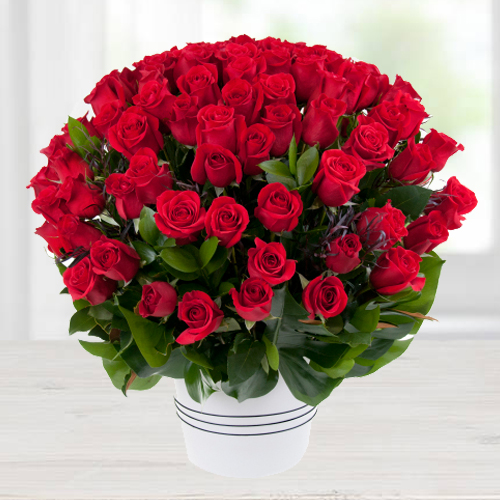 Magical 100 Dutch Red Roses with Alluring Affection