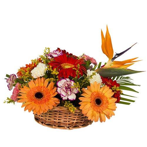 Luxurious Natural Beauty of Mixed Gerberas and Carnations Arrangement