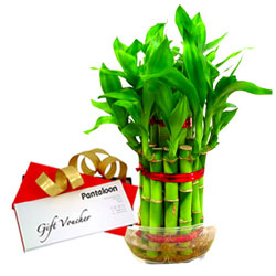 Green Bamboo Plant and Pantaloons Voucher