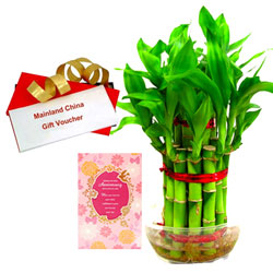 Fancy Gift of Bamboo Plant, Anniversary Card and Mainland China Gift Voucher