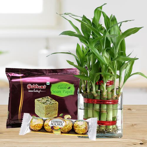 Eco Friendly Assortment Gifts