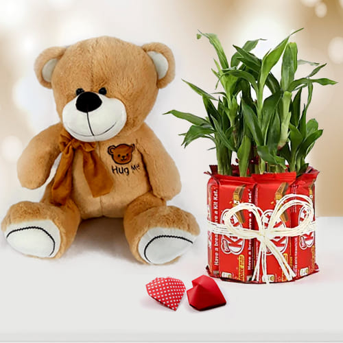 Wonderful Teddy with Chocolate n Lucky Bamboo Plant