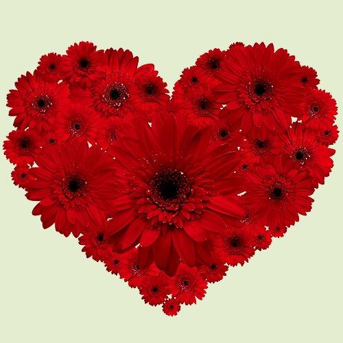 Stunning Heart-Shape Arrangement of Red Gerberas