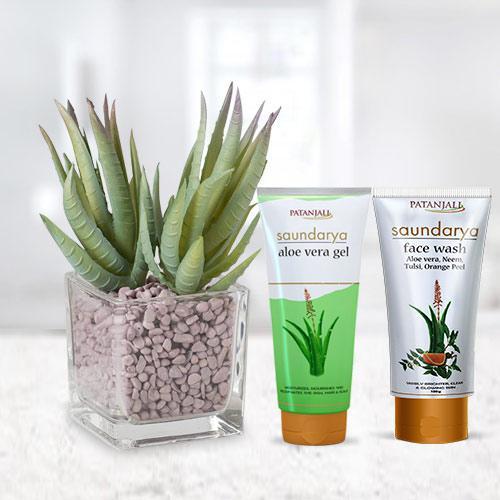 Premium Aloe Vera Gift Plant with Skin Care Hamper