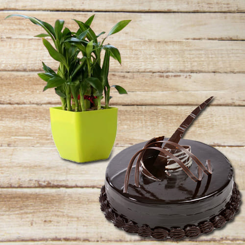 Elegant House Warming Gift of Chocolate Truffle Cake N Double Layered Lucky Bamboo