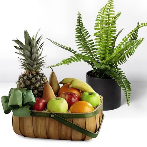 Go Green Air Purifier Bostern Fern with Seasonal Fruits
