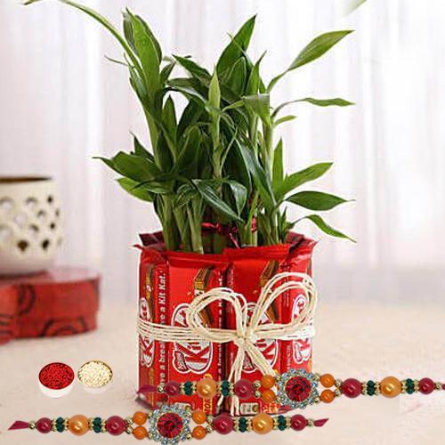 Enticing Stone Rakhi with Bamboo Plant n Kitkat Arrangement